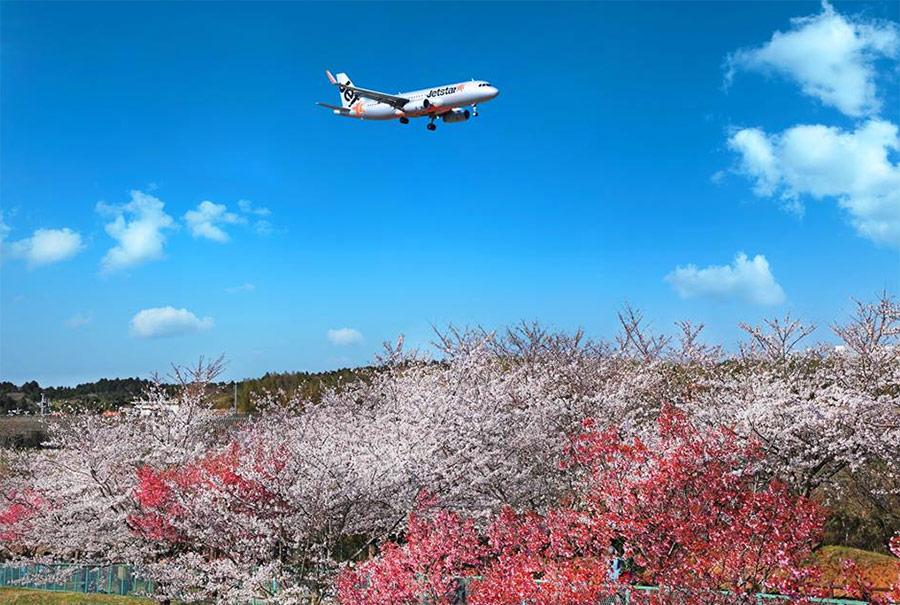 Vé máy bay từ Hà Nội đi Osaka bay thẳng Jetstar 4 chuyến/ tuần