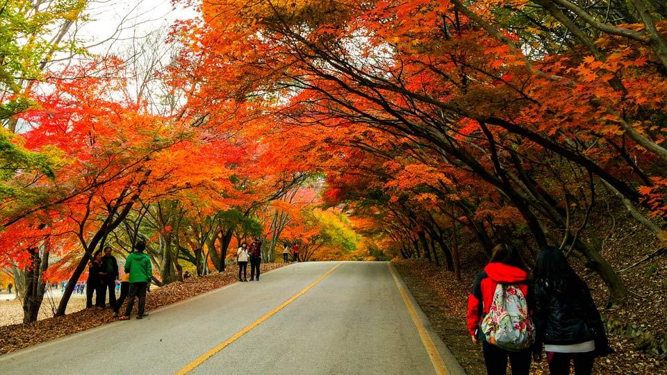Du lịch Hàn Quốc giá rẻ 5 ngày 4 đêm